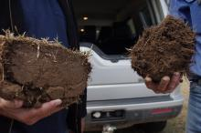 This is the pith of the story of soil renovation. These two sods were dug up from two parts of a paddock on Peter Alexander's farm at Glen Innes in New South Wales.  The sod on the left was dug up in an unrenovated part of the paddock and is like a brick, with minimal root penetration. The sod on the right was dug up from a DBS-renovated strip and shows soil structure, with plenty of rooting activity and obvious 'pathways' for water and air infiltration – the key to healthy plant growth.