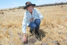 Former CSIRO scientist and microbiologist Dr Margaret Roper says her research shows current soil amelioration cultivation practices are harming the soil microbial population responsible for building fertile soils.
